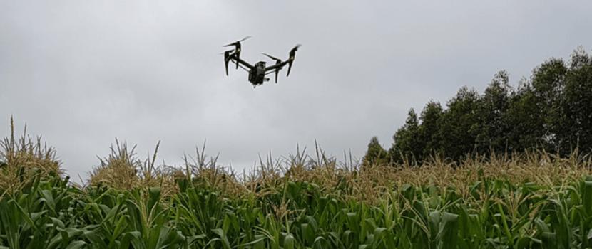 Sistema faz contagem automática de plantas na lavoura por imagens de drones